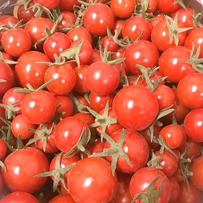 コムズファームミニトマト